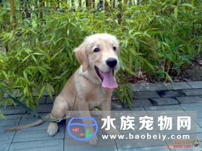 狗狗打嗝怎么办人和狗狗的打嗝还呕吐的原因及饮食的处理方法