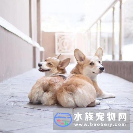 这只狗狗只能活3至6个月,美国男子做了一个艰难的决定:给狗狗截肢