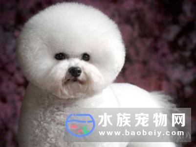 宠物狗绳是养狗的必备物品,新手主人必知的小训练方法!