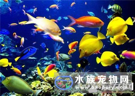 影响热带鱼繁殖的几种环境因素