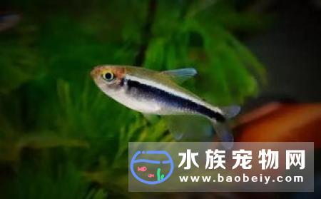 哪种热带鱼最好养养热带的需要注意五点