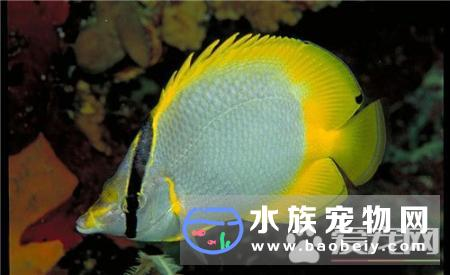 纯净水可以养热带鱼吗 最好还是不要纯净水养