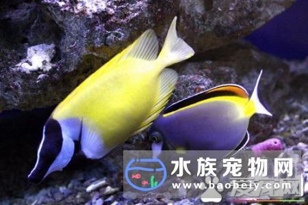 家庭养什么热带鱼宠物鱼什么最好养