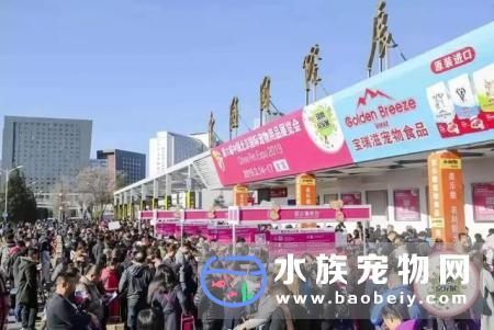 中国第二个10万 宠物展诞生