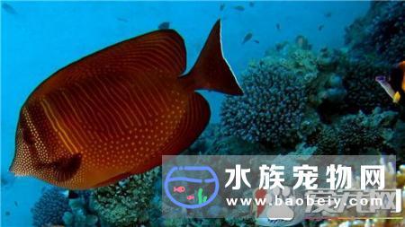 热带鱼的养殖方法,现在我们知道
