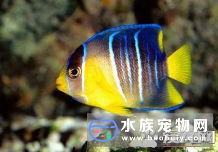 常见的十种热带鱼品种,让你对他们有个初步了解