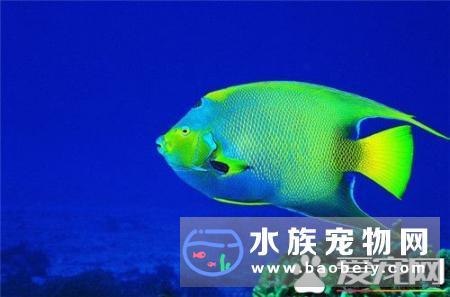 好养的热带鱼有哪些,常见的十种品种