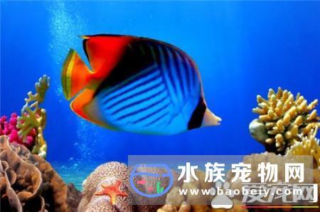 热带鱼饲料哪种好,我们知道
