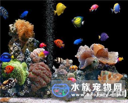 热带鱼生小鱼前的征兆_宠物频道