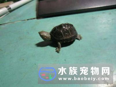 乌龟基本饲养要点