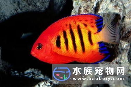 热带鱼冬天怎么换水 冬天换水需要注意事项