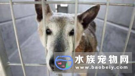 美国加州禁止宠物店售卖非获救动物