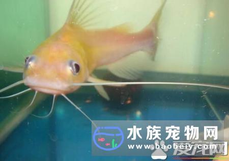 热带鱼怎么养才能成活水源选择