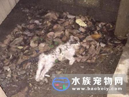 上海高档小区又现流浪猫集体暴毙业主怀疑被投毒