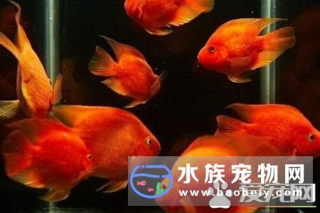 财神鱼和什么鱼一起养_宠物频道