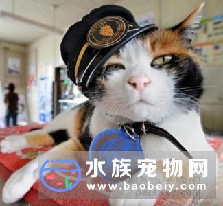 日本为猫站长举行豪华葬礼 一只新站长接替它的位置